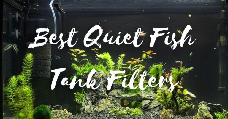 Best Quiet Fish Tank Filters